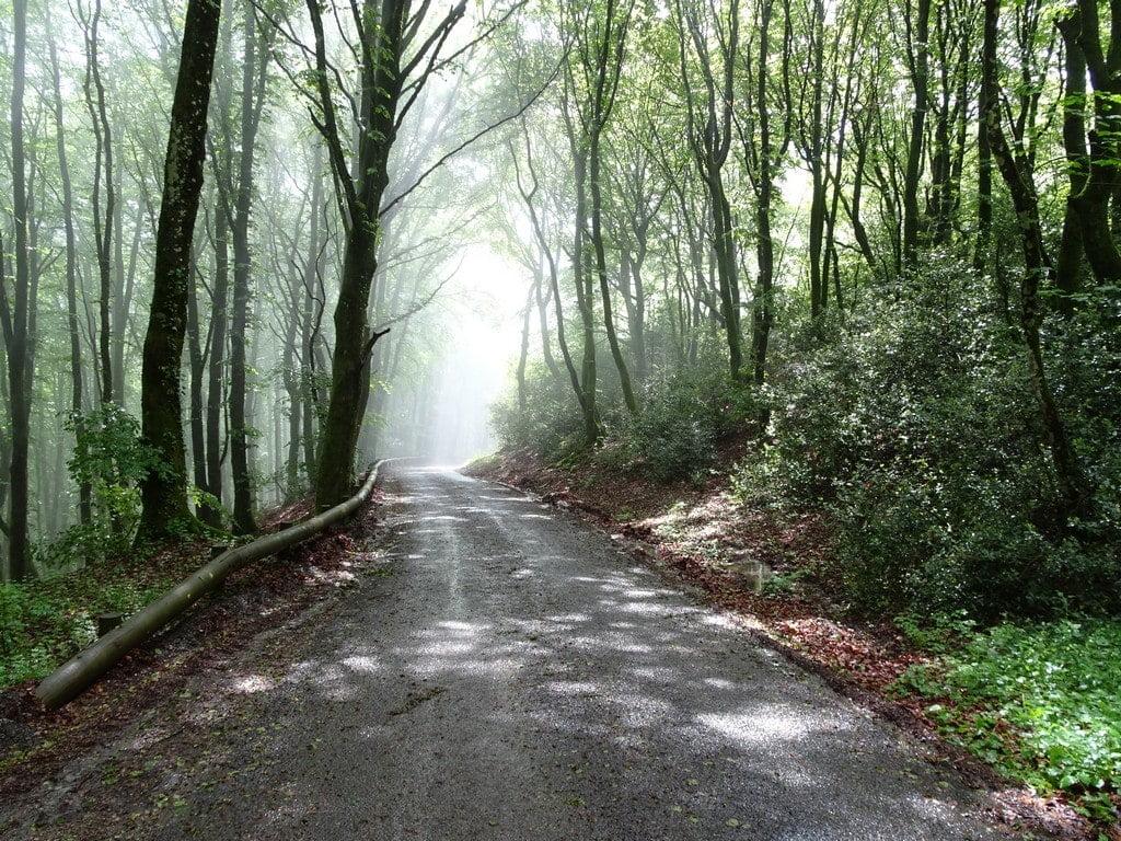 Éclaircie dans la descente du Mont Beuvray
